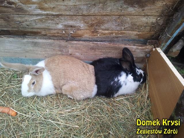 W naszej agroturystyce nie tylko ryby i sarny. Teraz każdy może pogłaskać nasze dwa (na razie) króliki.